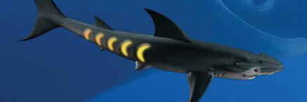 File:Main sharkopath.jpg