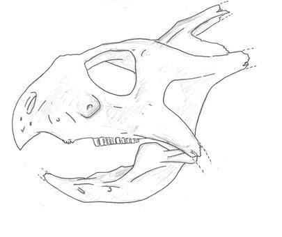 Projugloceratops.jpg