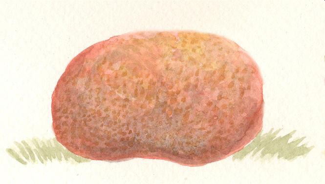 Ruby puffball by sphenacodon