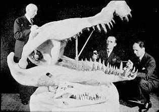File:Deinosuchus skull.jpg