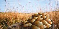 Grassland Rattleback