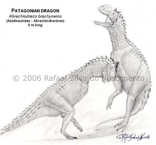 Patagonian Dragon