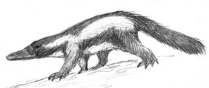Skunkapus