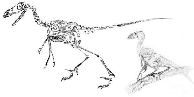 Arbroraptor sinensis