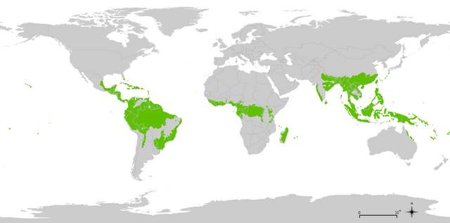 File:800px-tropical wet forests.png