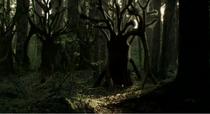 Lichen Trees (TFiW)