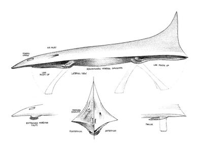 Jetdarter Anatomy