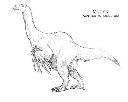 Moora