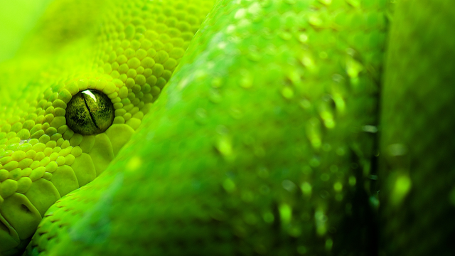 File:Green Snake.png