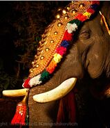Elephant-and-mahout