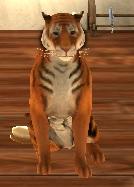 Plik:Tigerroom.jpg