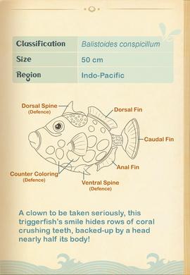 Clown Triggerfish§Aquapedia2
