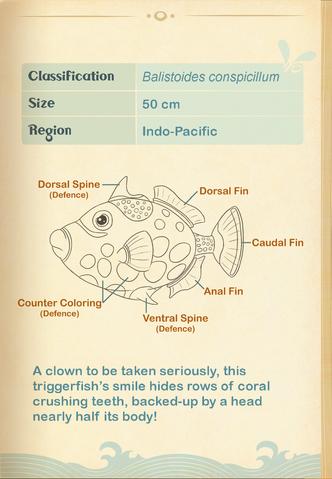 File:Clown Triggerfish§Aquapedia2.png