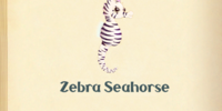 Zebra Seahorse
