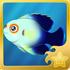 Pearlscale Pygmy Angelfish§Headericon