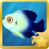 File:Pearlscale Pygmy Angelfish§Headericon.png