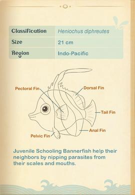 Schooling Bannerfish§Aquapedia2