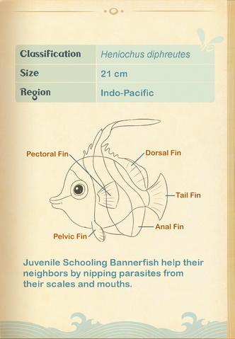 File:Schooling Bannerfish§Aquapedia2.png