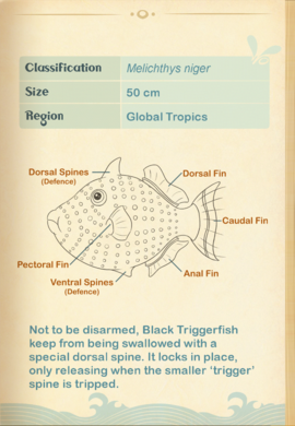 Black Triggerfish§Aquapedia2
