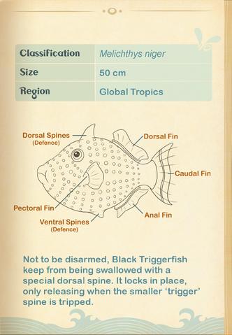 File:Black Triggerfish§Aquapedia2.png