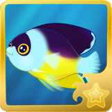 File:Abe's Pygmy Angelfish§Headericon.png