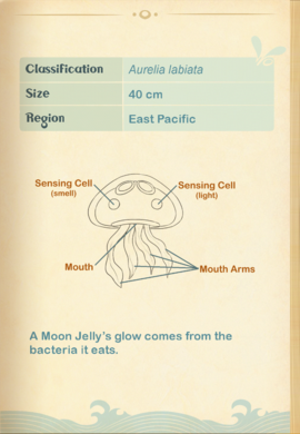 Lipped Moon Jellyfish§Aquapedia2