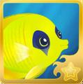 Bluecheek Butterflyfish§Headericon