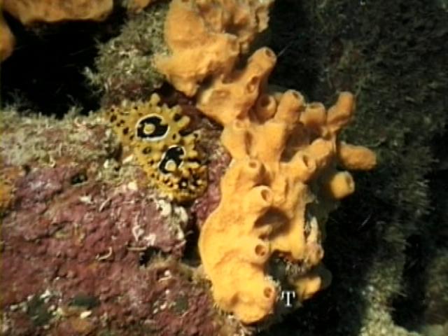 File:Case of the Sponge Bob 023.png