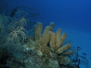Case of the Sponge Bob 039