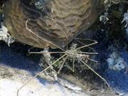 Case of the Sponge Bob 095