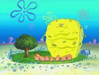 Big Sponge2