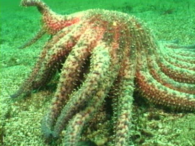 File:Case of the Sponge Bob 055.png