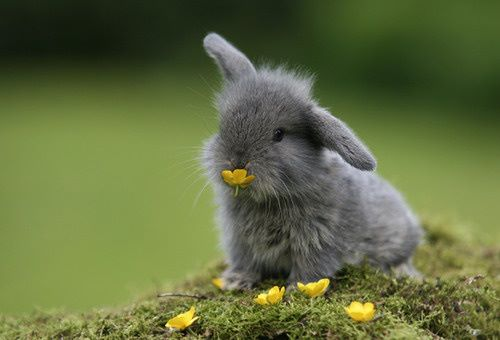 File:Cute-Bunny-Pictures.jpg
