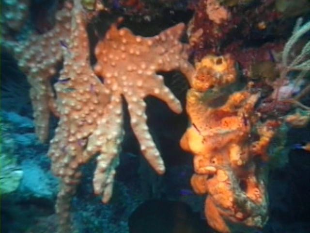 File:Case of the Sponge Bob 030.png