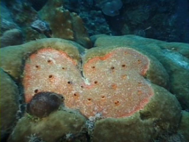 File:Case of the Sponge Bob 036.png