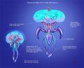 A JellyFish Elec.jpg