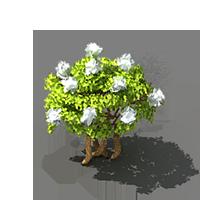 File:Snowball Bush.png
