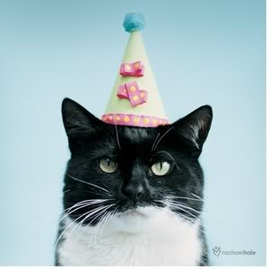 File:CatinPartyHat.jpg