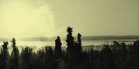 Ongerepte natuur: vier vreemdelingen