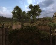 CS marsh sfarmstead tocordon