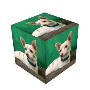 File:Sam the Chihuahua Cube.jpg