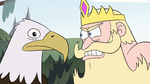 S2E10 King and bald eagle have a staring contest