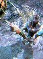 Shrieker SC2 Game1.jpg