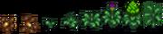 Artichoke growth.png