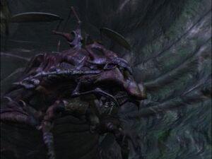 ArachnidMommaRippler