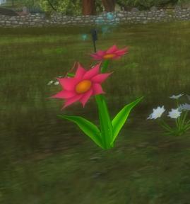 Aideens blommor