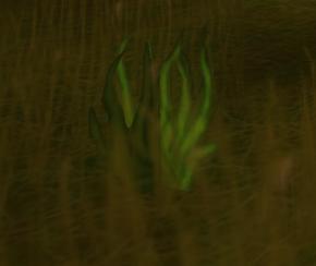 Färskt gräs.png