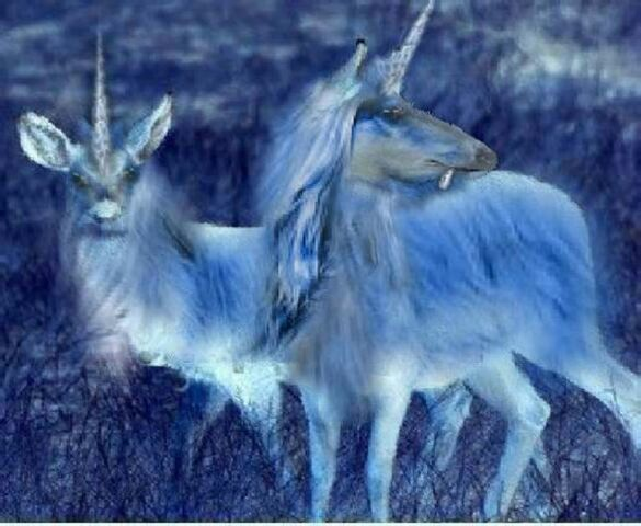 File:Unicorns Without the Glamour by mmpratt99.jpg