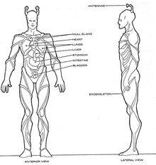 Homo indi physiology