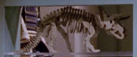 File:Triceratops skeleton model.jpg
